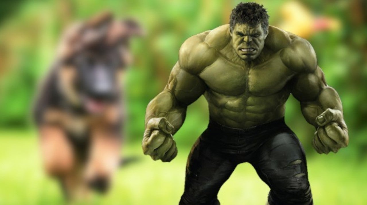 Hulk Puppy That Was Born Bright Green Goes Viral