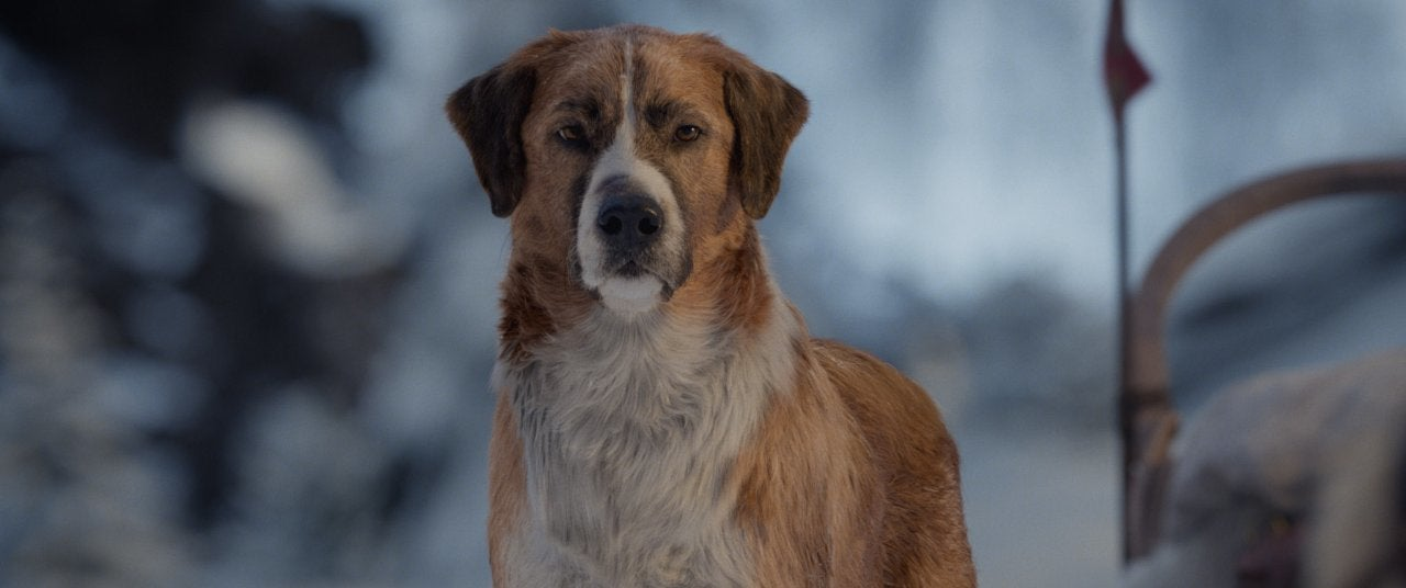 the call of the wild movie dog buck