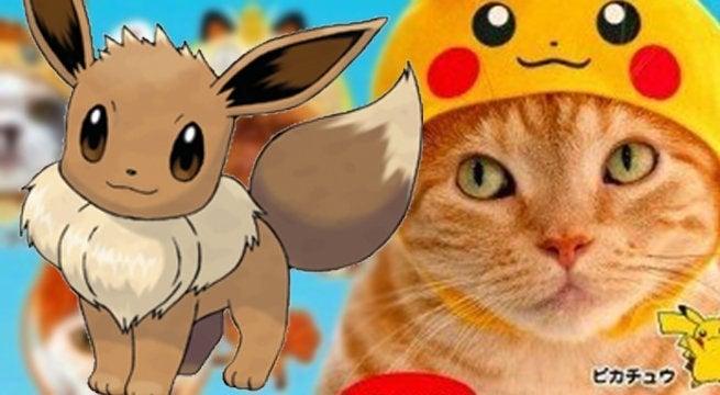 pokemon cat hat