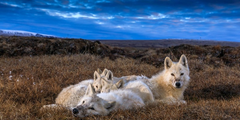 kingdom of the white wolf national geographic