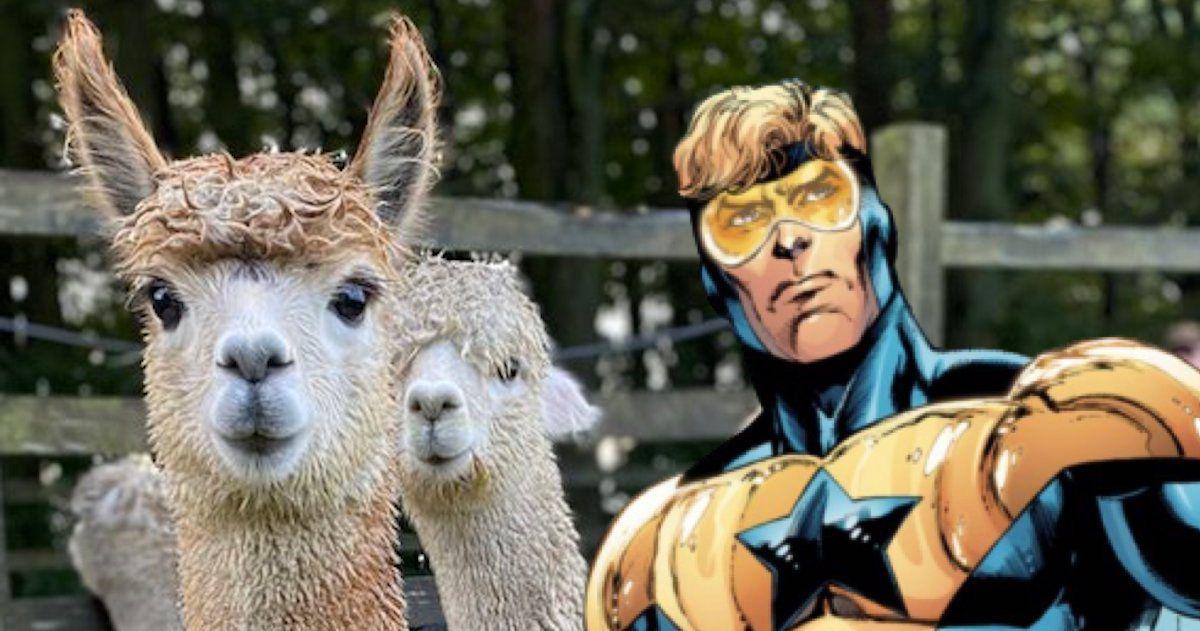 booster-alpaca