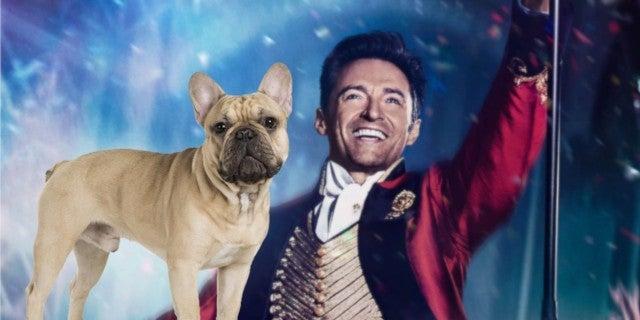 Hugh Jackman Dancing French Bulldog Dali Viral Video