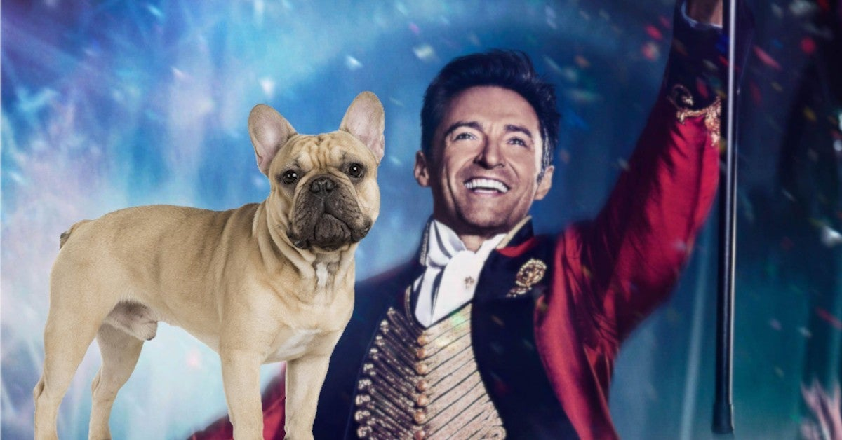 Hugh Jackman Dancing French Bulldog Dali Viral Video