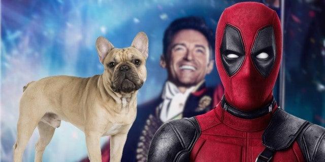 Hugh Jackman Dancing French Bulldog Dali Viral Video Ryan Reynolds Comments