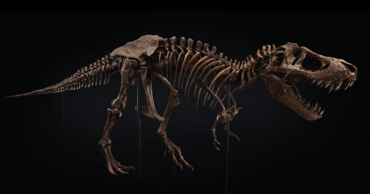tyrannosaurus rex t rex fossil skeleton christie's stan