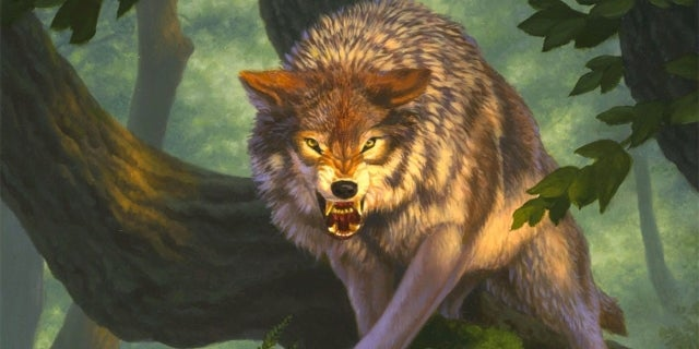 wolf hed