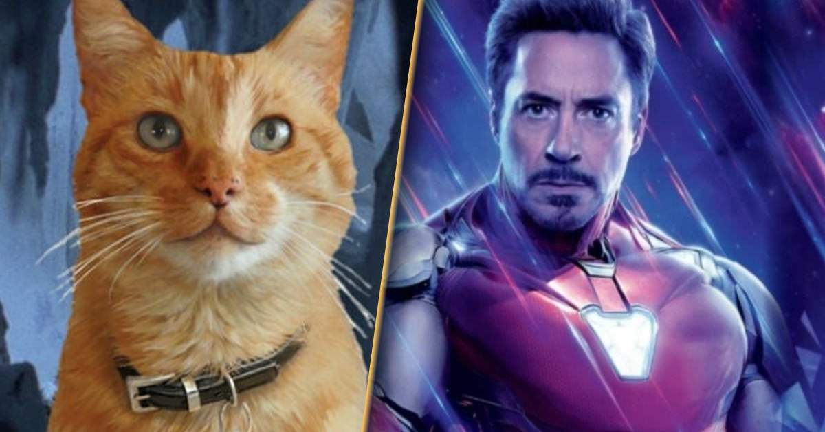 iron-man-cat-helmet