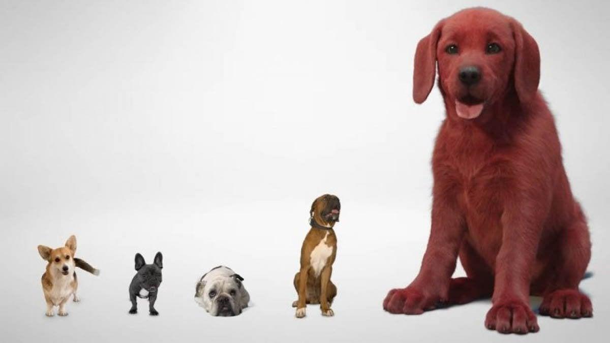 clifford the big red dog reax