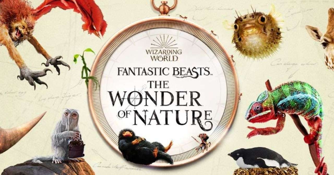 Harry Potter's Fantastic Beasts on Display at London Museum