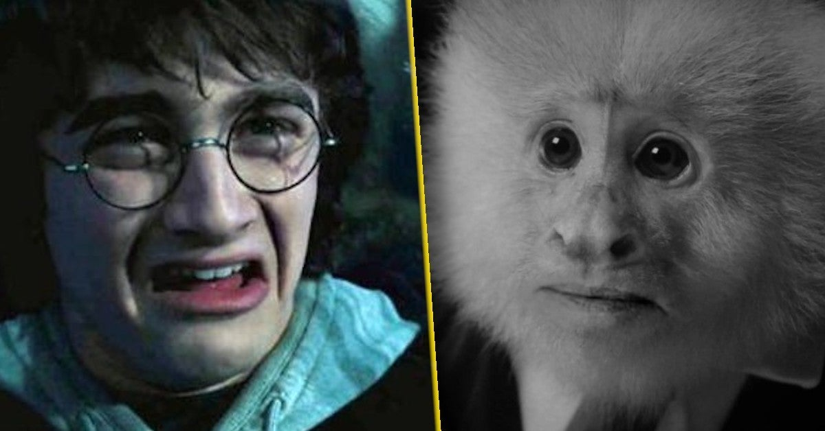 daniel radcliffe monkey harry potter nsfw