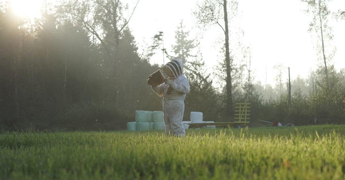 attack of the murder hornets beekeeper