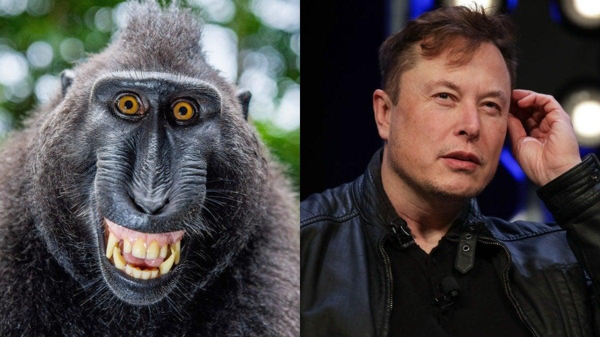 Elon Musk Monke