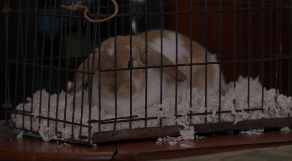 wandavision senor scratch rabbit