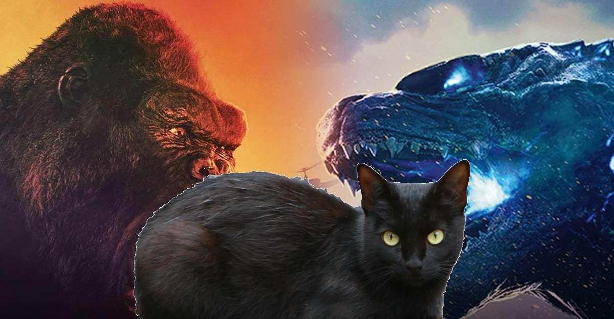 Godzilla Kong Cat