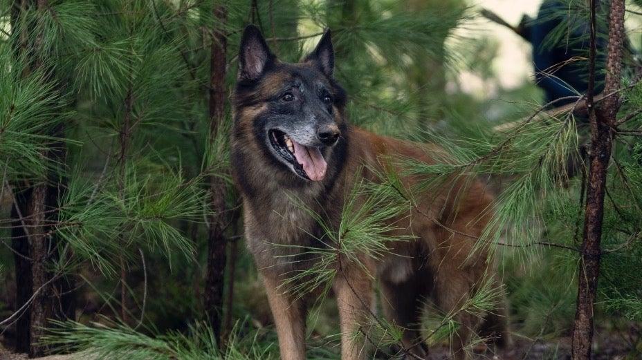 The Walking Dead Dog Dixon