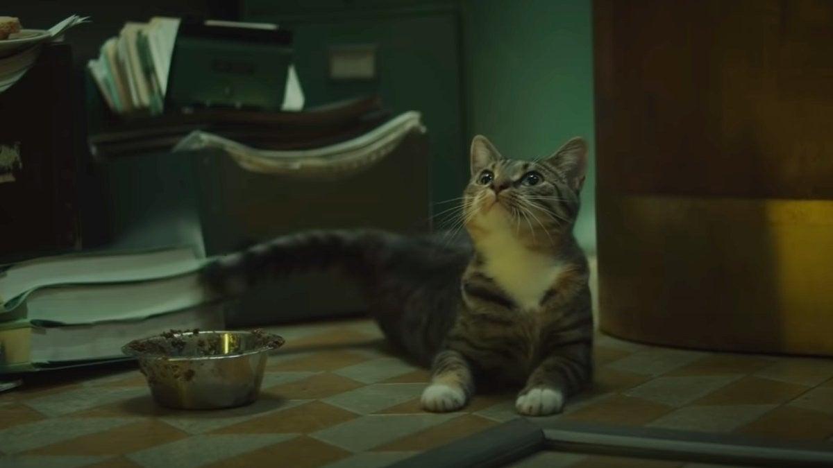 loki_Cat