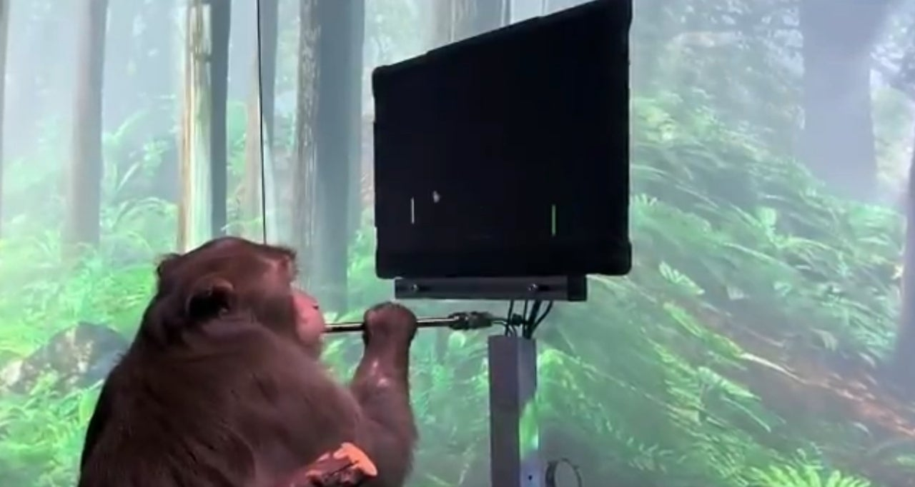 neuralink monkey pong