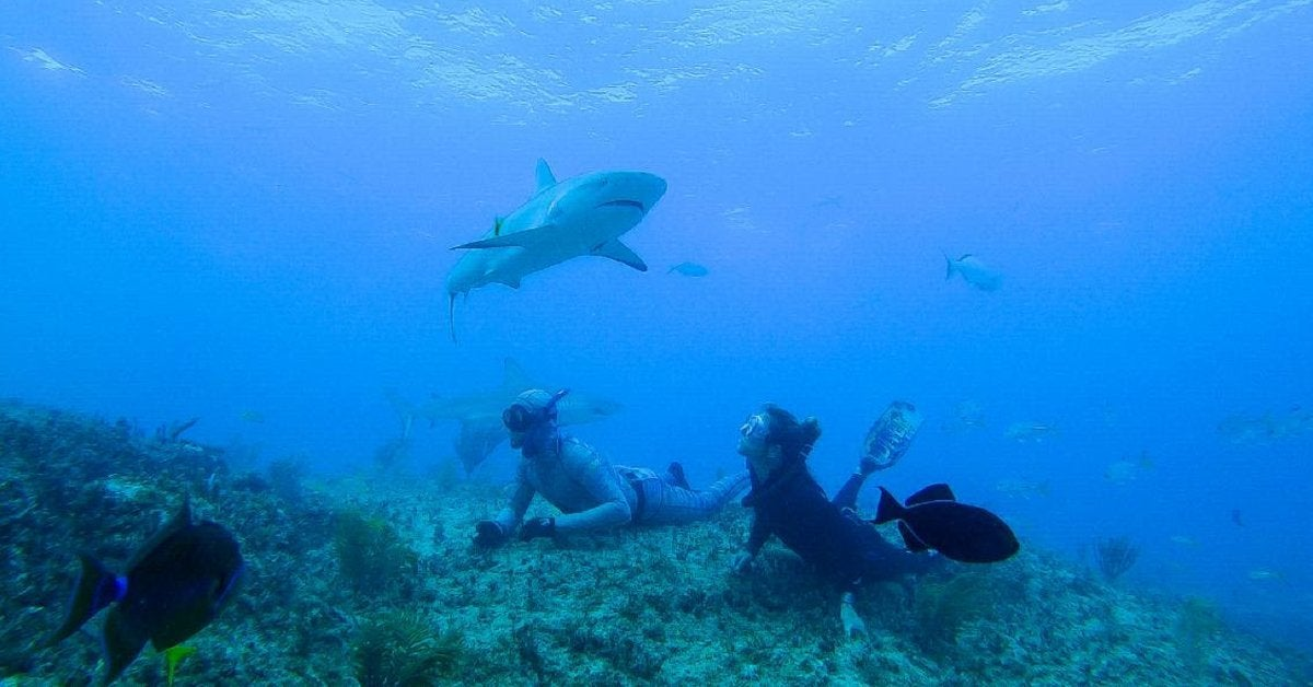 shark academy tv series discovery channel