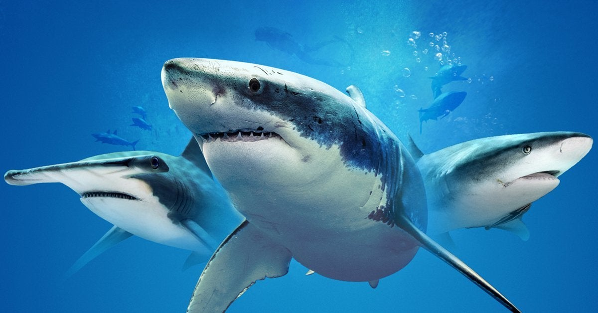 shark week discovery channel