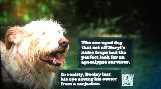 one-eyed-dog